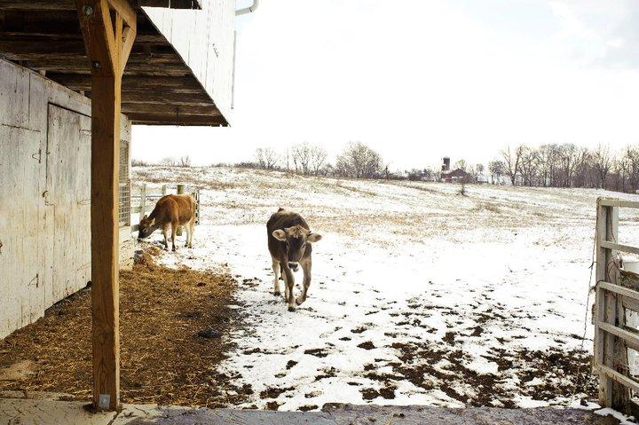TenderMercies-EliEaston-Farm (2)